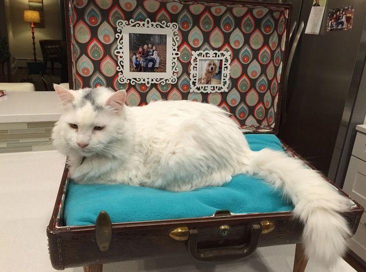Новая жизнь старого чемодана - фотоподборка - Лайфхак - хитрости и неожиданные советы на Город мастеров