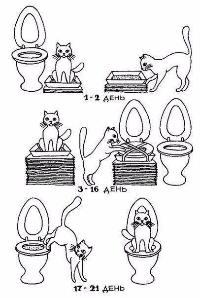 Как приучить кота к унитазу?