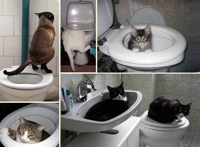 Как приучить кота к унитазу? - Лайфхак - хитрости и неожиданные советы советы хозяйки на Город мастеров