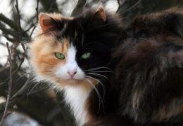 Благополучие очага – 6 примет связанных с кошками