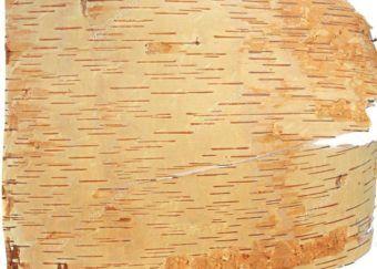 Стельки из бересты как средство от грибка стопы🔴 Стельки из бересты как средство от грибка стопы